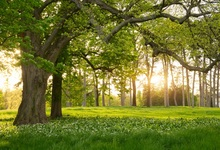 Laeacco Spring Green Tree Floret Grassland Portrait Scenic Photo Backgrounds Photography Backdrops Photocall Studio