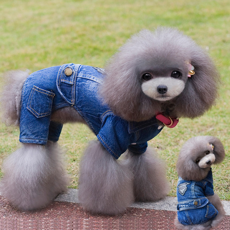 Where Can I Buy Cheap Dog Clothes