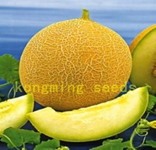 50  Yellow Honey Melon Medovyy Aromat Sweet Heirloom vegetable seeds for home plant sweet delicious