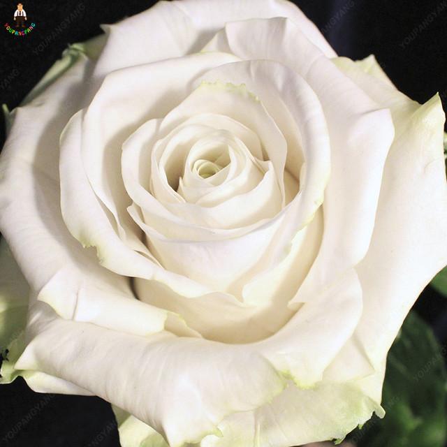 200 pcs rainbow rose flower plants beautiful mix color flower easy to plant bonsai rose tree