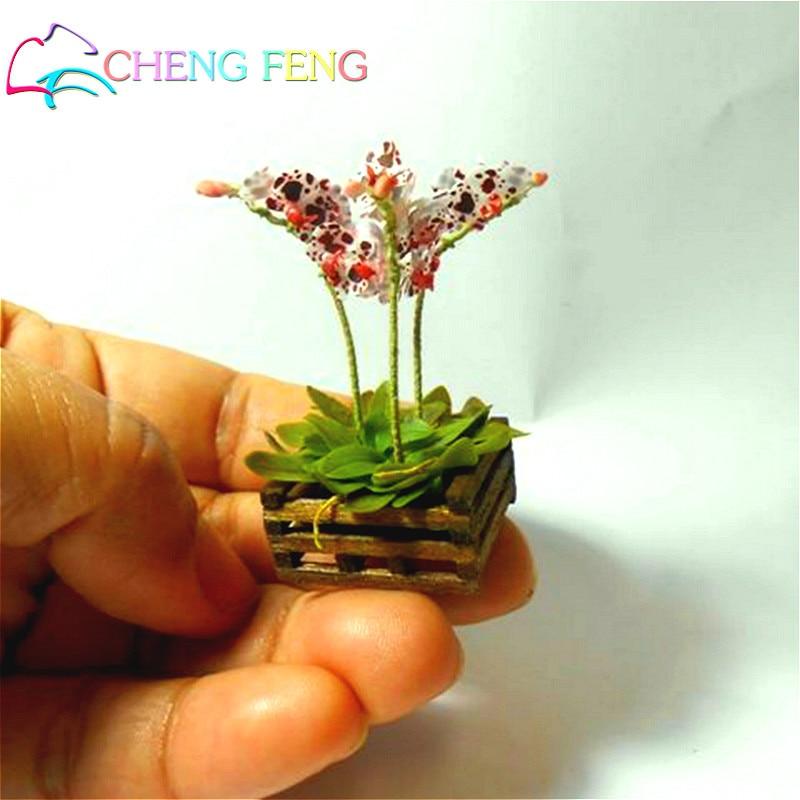 100 Pcs Mini Bonsai Orchid Seeds Indoor Home Miniature