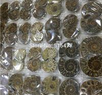 1KG (2.2LB) Natural Rainbow Split Ammonite Fossil Cut in Half Madagascar healing. Pairs ,Wholesales Price, Free Shipping