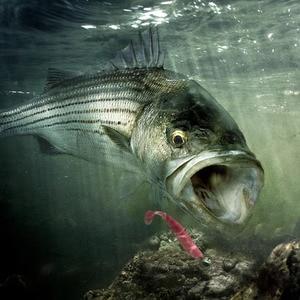 Image 2 - 6ชิ้น/ล็อตWobblerเหยื่อตกปลา7ซม./9ซม.ทำความสะอาดง่ายSwimbaitซิลิโคนเหยื่ออ่อนคู่สีปลาคาร์พประดิษฐ์เหยื่ออ่อน