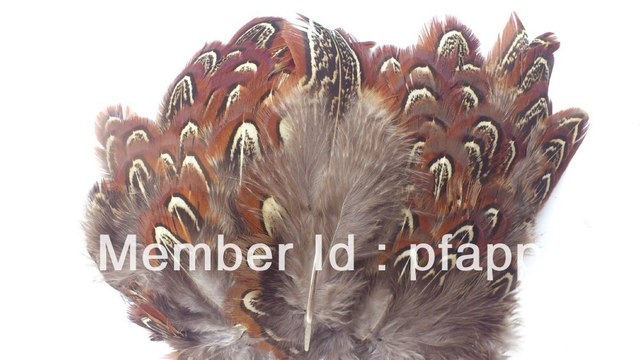 Christmas Decoration Feather, Pheasant Feather Band, Best Factory Price