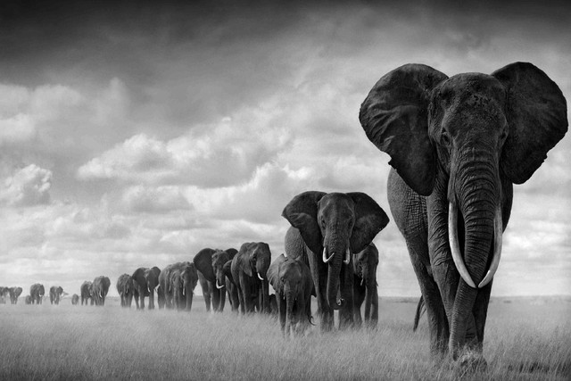 DIY frame Way Of Life Sky Africa Elephant Wild Animal Art Silk ...