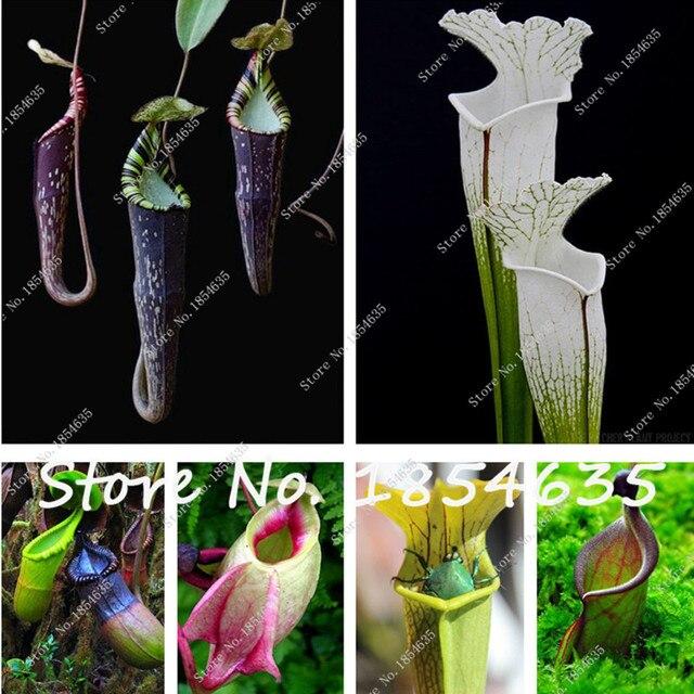 plante carnivore balcon