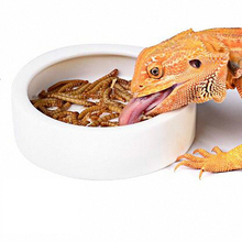 Bearded Dragon Worm Dish with Feeding Tweezers Tongs Ceramic Reptile Gecko Feed Bowl Escape Proof