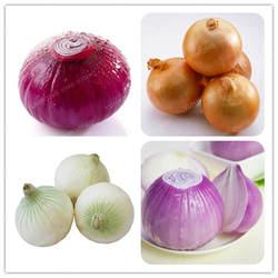 100 шт./пакет свежий гигантские лук бонсай растительные Бонсай Зеленый Еда проращивания семян 95% гигантский овощей для Сад бонсай