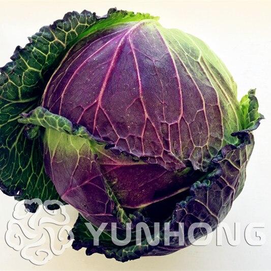 100 шт. оптовая продажа 100% Authentic Red капусты бонсай красный капуста цикорий BonsaiSelling здоровья овощей, бесплатная доставка