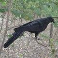 30 cm Simulación Negro Cuervos Pluma de Cosplay de Halloween Fotografía Apoyos Mágicos Juguetes de Decoración De Halloween De Plástico Señuelo