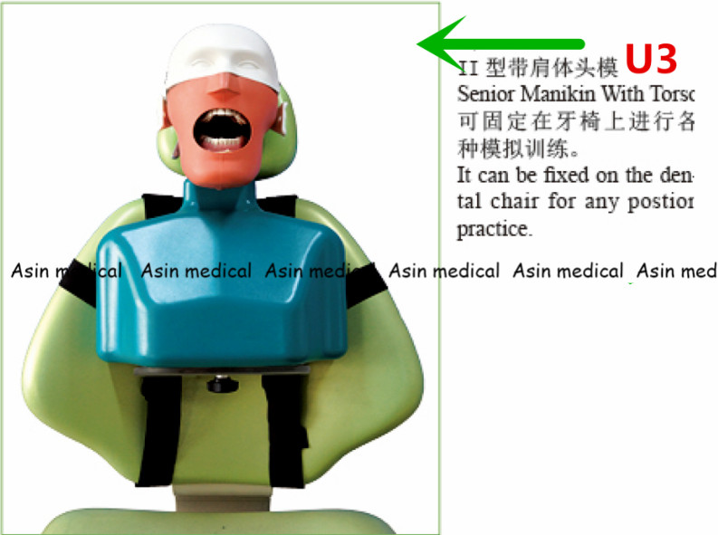 High Quality Senior Manikins Model With Torso It can be fixed on the dental chair for any position practice. dental simple head model apply to the oral cavity simulation training fixed on the dental chair for any position practice