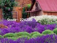 Needlework Purple Lavender Cottage Scenic Embroidery DIY DMC Unprinted Cross Stitch Kits Pattern Counted Cross Stitching