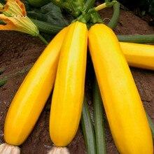 Rare Yellow Summer Squash Zucchini BANANAS vegetable seeds 10 pcs Russian Heirloom Organic rare Pumpkin Varieties Seeds plants