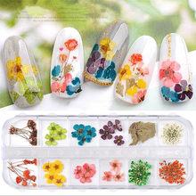 1 caixa de mistura flores secas decoração do prego 3d natural seco flor adesivos diy criatividade arte do prego decalques polonês manicure acessórios