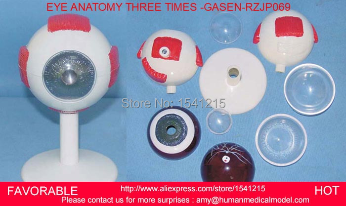 EYE SOCKET ANATOMY MODEL,HUMAN GIANT EYE MODEL, EYEBALL STRUCTURE MODEL,EYEBALL ANATOMICAL MODEL THREE TIMES -GASEN-RZJP069 skin block model 26 points displayed human skin anatomical model skin model