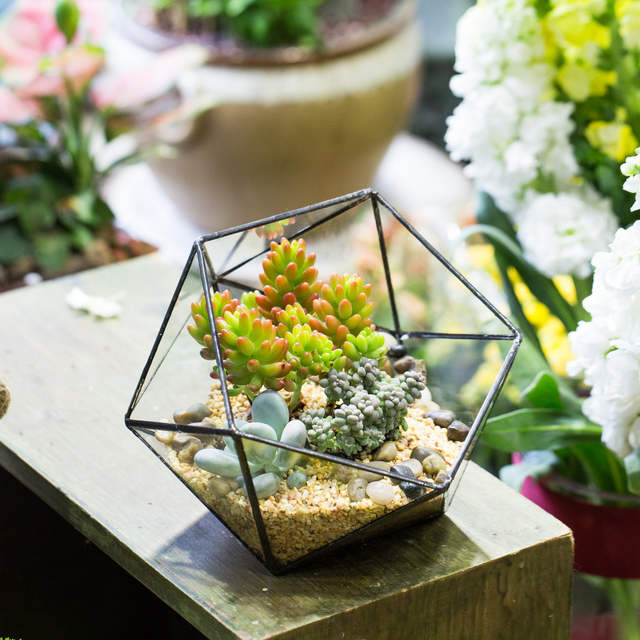 Online Shop Desktop Geometric Glass Bowl Shape Plants Terrarium