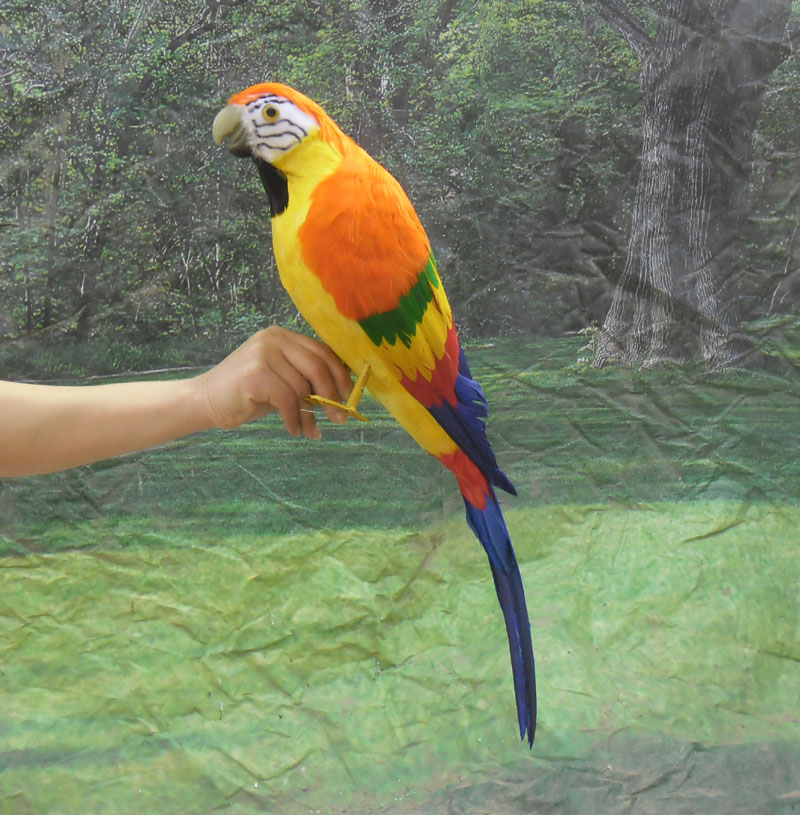large 60cm simulation colourful Macaw parrot model toy,plastic foam & feathers bird parrot,Home Decoration xmas gift w5602 simulation owl toy black feathers night owl bird large 34cm hard model home decoration birthday gift h1150