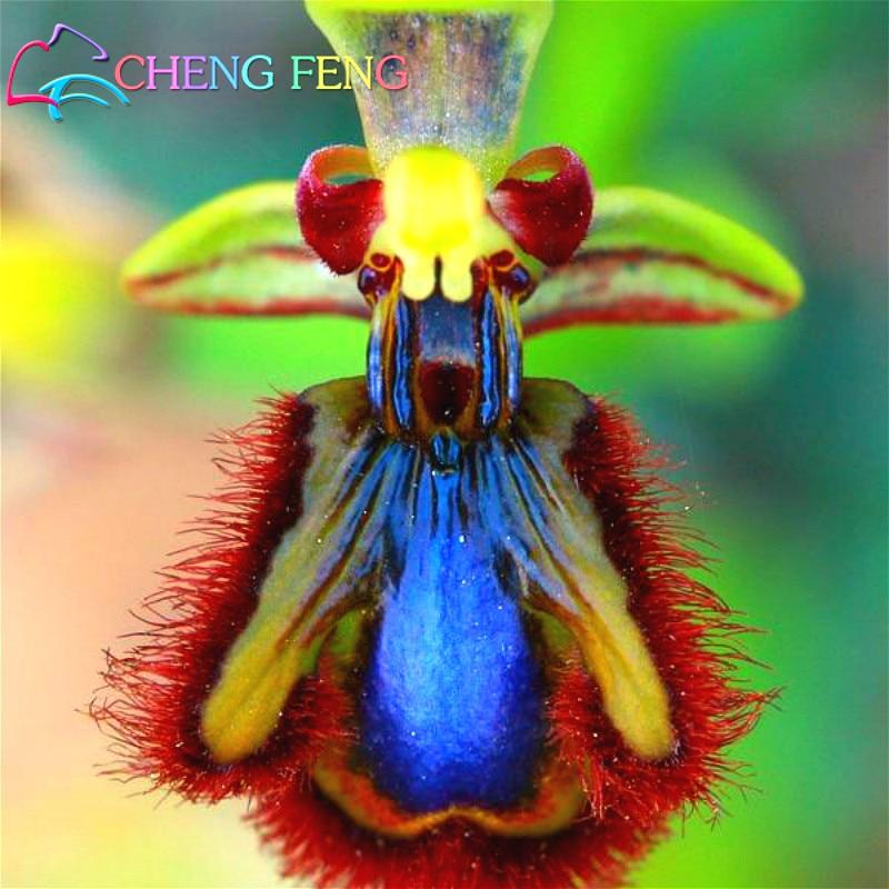 100pcs Orchid Seeds Beautiful Garden Bonsai Balcony Flower Rare Butterfly Orchids Seed Four Seasons font b