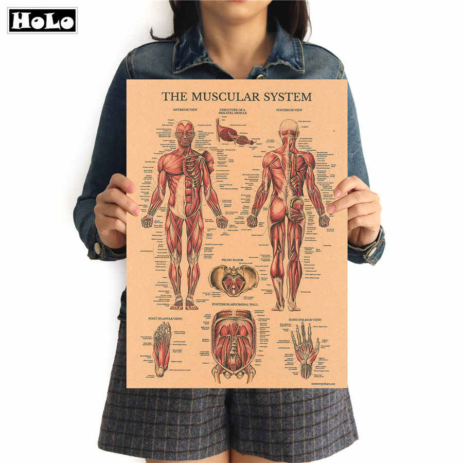 O sistema muscular do corpo humano Estrutura HD Bar Home Decor Retro Kraft Papel Poster Do Papel Do Vintage Pintura 42x30cm