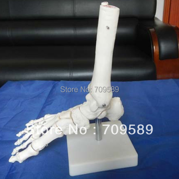 ISO Life-Size Foot Joint Model, Foot Skeleton Model plastic standing human skeleton life size for horror hunted house halloween decoration