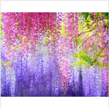 50pc red creepers seeds Wisteria seeds Climb rattan flower seeds Bonsai plants Seed for home & garden 49%