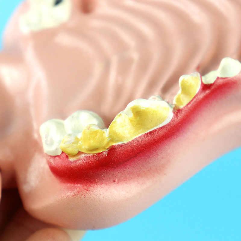 Con chó Răng Nha Khoa Bệnh Lý Mô Hình Chó Bằng Miệng Mô Hình Giải Phẫu Động Vật Giảng Dạy Trình Diễn Mô Hình
