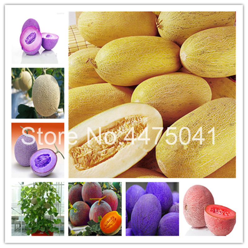 Best Top 10 Cantaloupe Melons List And Get Free Shipping M3jjd1l9 Heap of cantaloupes at market. best top 10 cantaloupe melons list and