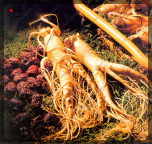 20pcs/bag Stratified Chinese hardy Panax Ginseng ,Herbal Seeds,Grow your own Ginseng Roots