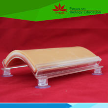 Medical teaching supplies human skin suture model for muscle suture exercises and knotted in surgical training
