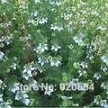 Настоящее семян, Горячий продавать 20 шт./пакет Nigella Sativa, черный тмин семена бонсай завод DIY домашний сад бесплатная доставка