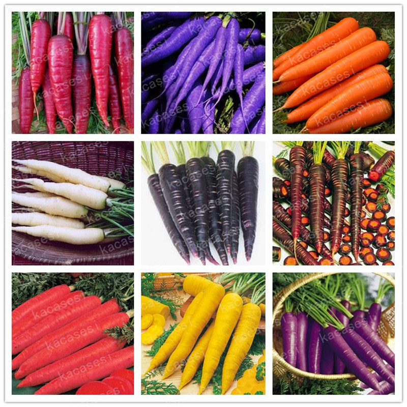 200 Pcs Multi Color Carrot Bonsai Healthy Fresh Vegetable Fruit Plants Good for Cooking Heirloom Home Garden Plant in Bonsai from Home Garden