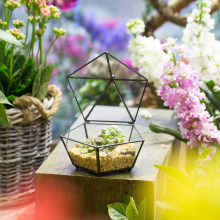 Small Modern Artistic Clear Jewel-boxed Pentagon Shape Glass Geometric Terrarium Plant Succulent Planter Box Moss Fern Flowerpot