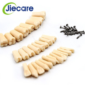 Image 4 - 28 PCS / Bag High Quality Resin Simulation Tooth Grain Dental Model For Dentist Exam Preparation Teaching Free Shipping