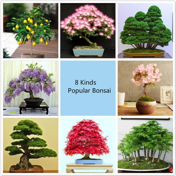 online kaufen gro handel kleine bonsai baum aus china. Black Bedroom Furniture Sets. Home Design Ideas