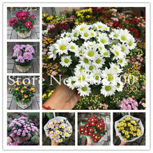 Promotion! 50 Pcs/Lot Mixed Daisy Bonsai,African Chrysanthemum Balcony Bonsai Flower Family Potted Plants Diy Home & Garden(China)