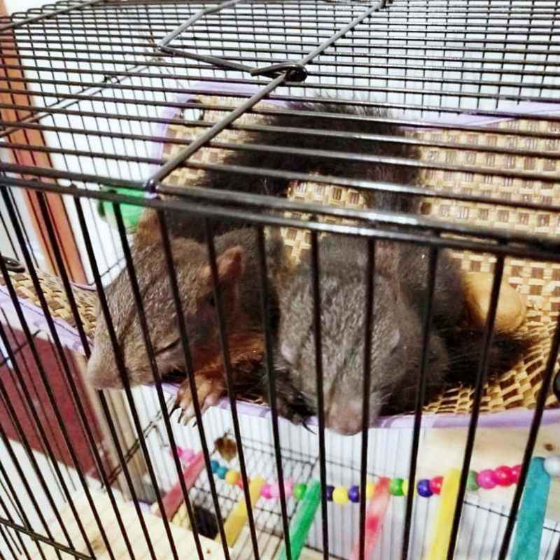 Ouriço Parrot Hammock Hanging Bed Mat para Hamster Cobaia Gaiola Ninho Casa Balanço Brinquedos