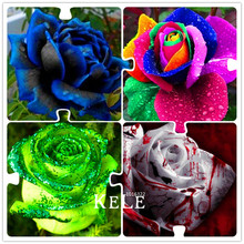 Buy  tiful rose Bonsai plants for home & garden  online