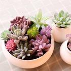 Simulation Plants Al...