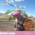 50 pcs de maca, Sementes de legumes Lepidium meyenii, Sementes de ervas medicinais Ginseng peruano