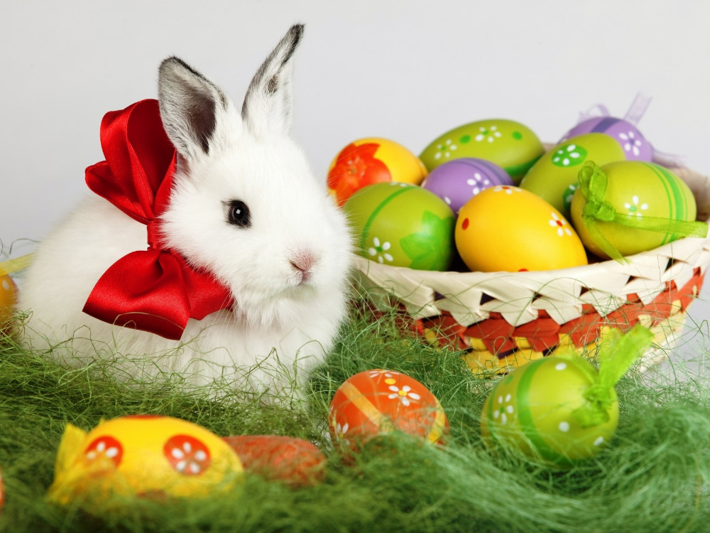 Compare Prices on Animal Crossing Easter- Online Shopping/Buy Low ...