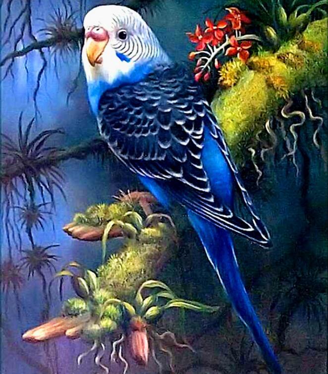 gyémánt hímzés papagáj, teljes négyzet, teljes csomag, strasszos festés, 5d gyémánt, állatok, gyémántfestés madarak