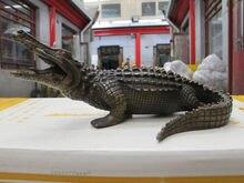 10 «Западная Книги по искусству латунь скульптура амфибий и рептилий крокодил крокодилов украшения сада 100% натуральная латунь