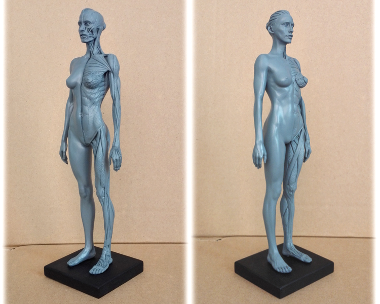 30cm Human Female dental dentist ps4 Model Anatomy Skull Head Muscle ...