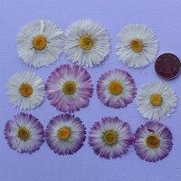 Dekoracje ślubne hurtownicy suszone naciśnij Kryształ Kwiat Daisy Dla Bransoletka bezpłatny transport 1 paczka/10 torby (60 sztuk)