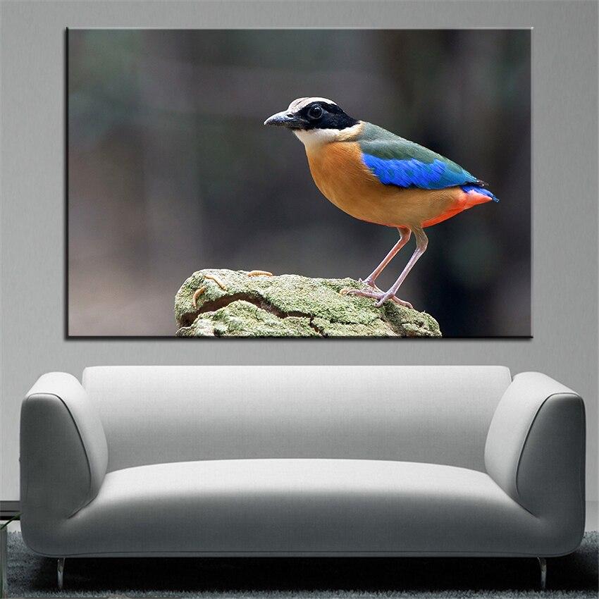 https://i1.wp.com/ae01.alicdn.com/kf/HTB17hi_MVXXXXXoXVXXq6xXFXXXr/Grote-maat-Printing-Olieverf-Colour-de-mooie-vogel-Muur-schilderen-POP-Art-Muur-Foto-Voor-Woonkamer.jpg?crop=5,2,900,500&quality=2880