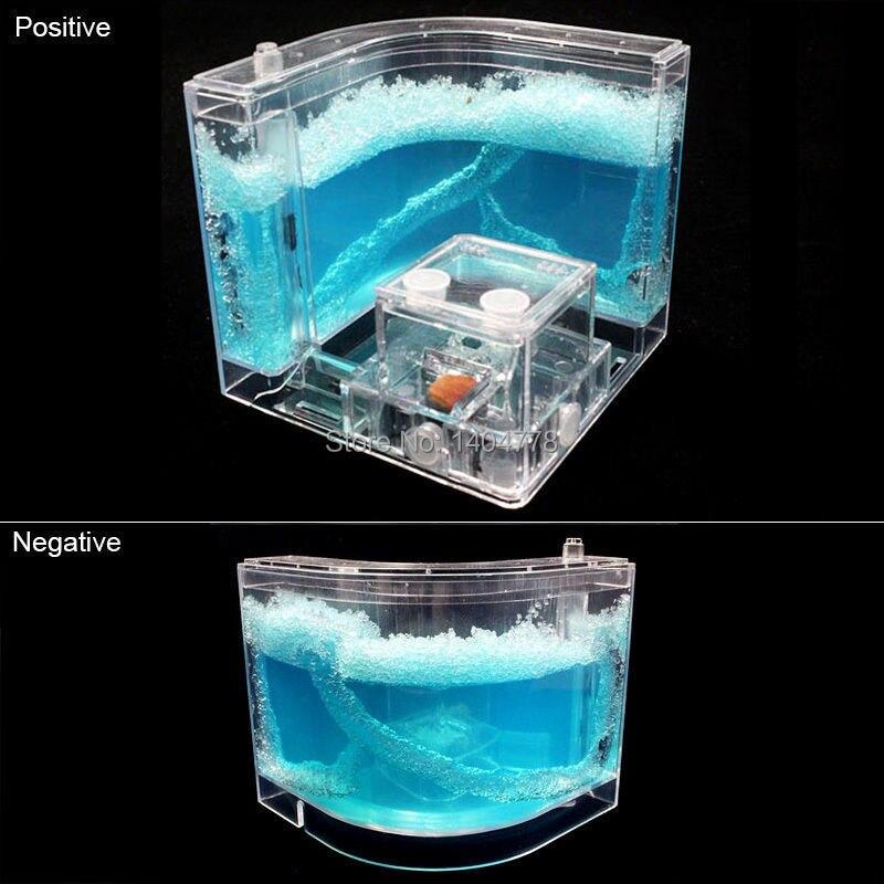 3D Gel Ant Maze Farm Nursery Live Feeding Antnovelty System Model
