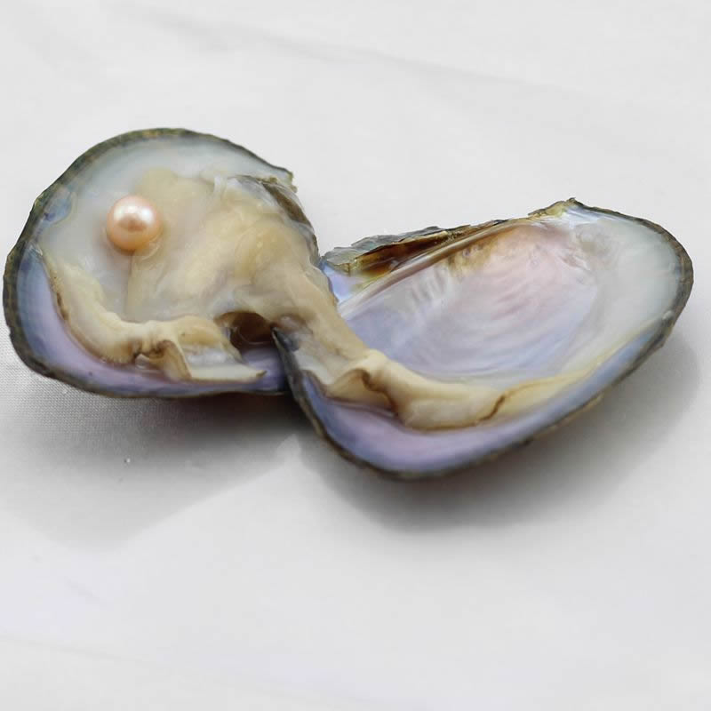 Freshwater Vacuum-pack Oyster Wish Pearls 7-8mm Mussel Shell with Pearl Inside Mysterious Surprise Gift