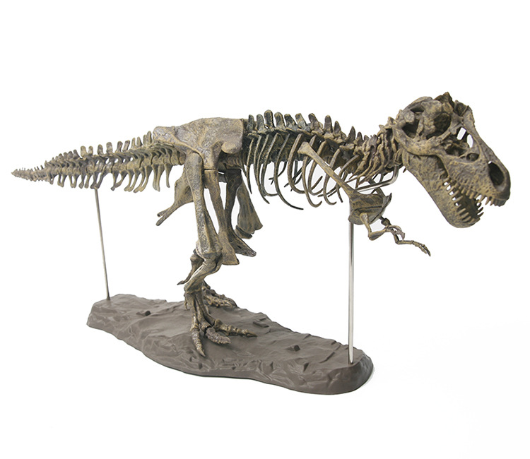 El tiranosaurio Rex esqueleto de dinosaurio de T-Rex juguete Animal de decoración Super