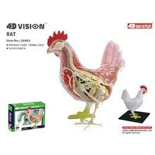 4D курица интеллект сборка игрушка животное орган анатомическая модель медицинская обучение DIY популярная научная техника