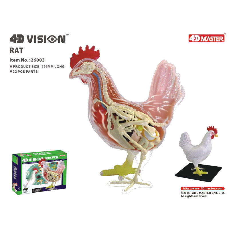 4D Chicken Intelligence Assembling Toy Animal Organ Anatomy Model Medical Teaching DIY Popular Science Appliances
